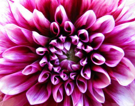 flower Stock Photo - 3278903