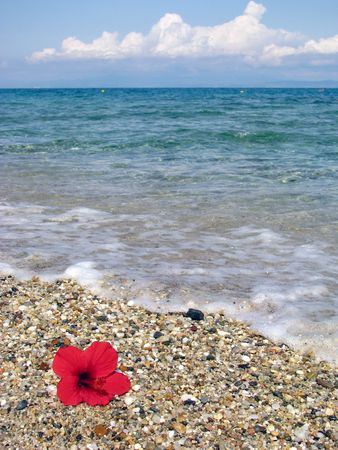 pedant: lonely flower on the beach