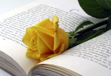 dainty: yellow rose placed in book