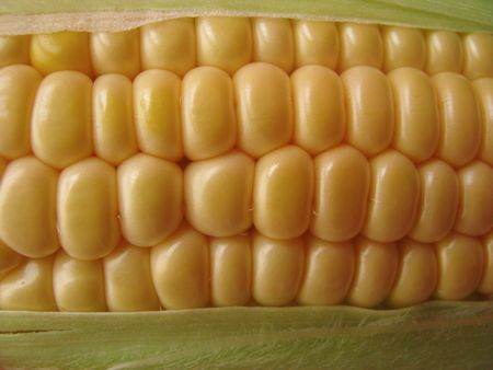 Closeup of fresh corn photo