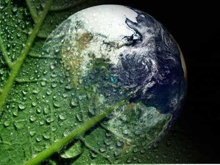 earth and wet lamina photo