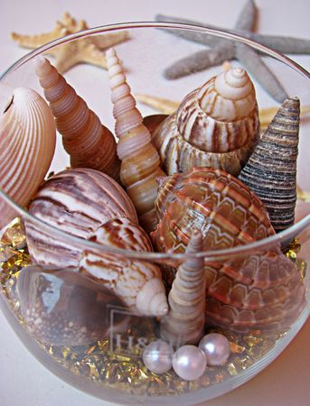 bordered: pearls and shells