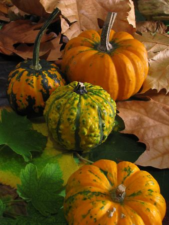 Group of colorful pumpkins on dry autumn leaves photo