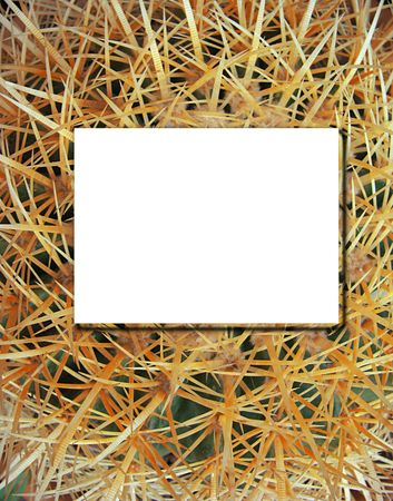 Close up of beautiful cactus with place for text photo