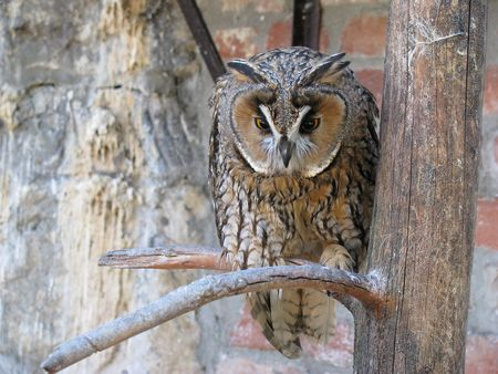 wise owl photo