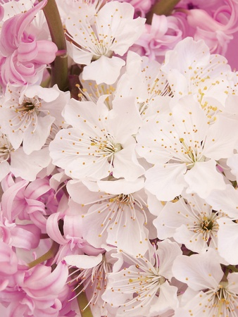 contryside: flowers background           Stock Photo
