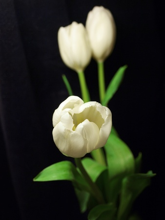 contryside: flowers background