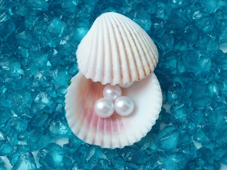 conch shell: treasure from the sea  Stock Photo