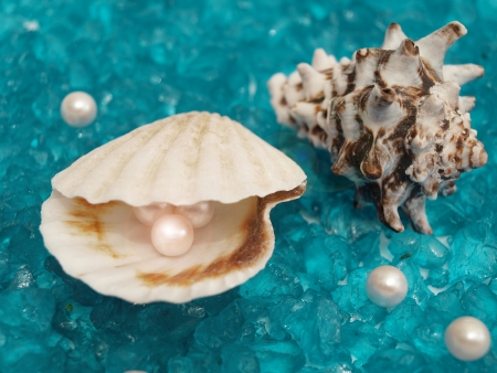 oyster shell: pearl and shells
