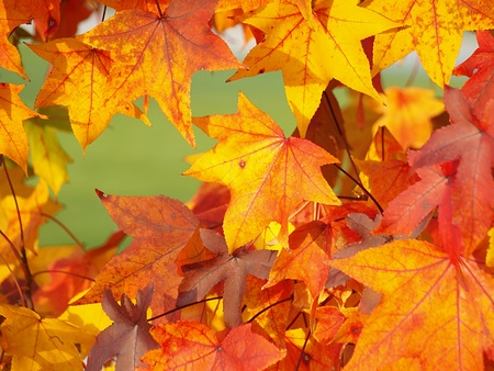 Autumn leaves photo