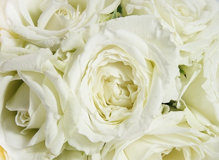 contryside: white roses