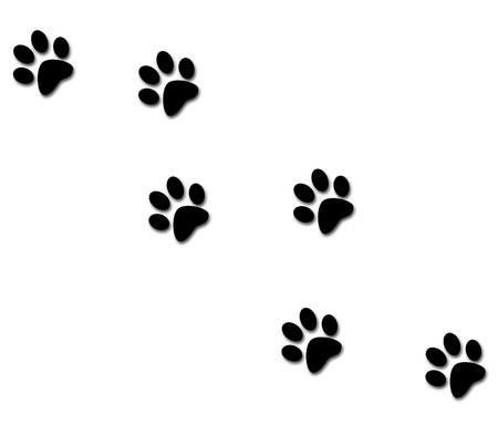 animal tracks: animal footprints  Stock Photo