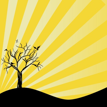 sun tree silhouette  photo