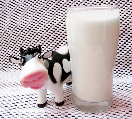 Fresh,white milk product in a glass and a sweet cow photo