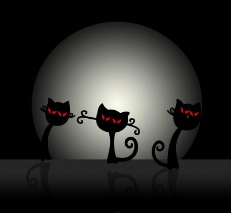 black cat,moon,halloween concept photo