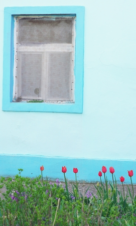 Interesting vintage blue window with colorful plants  photo