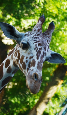 cute giraffe isolated on green background made of leaves Stock Photo