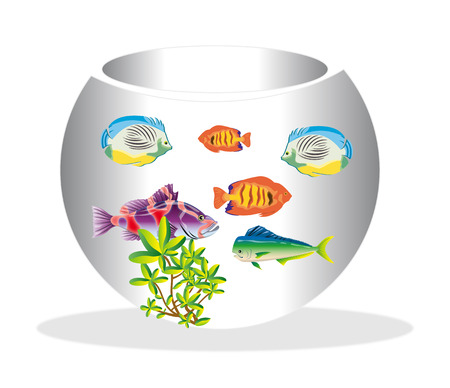 illustration of a water bowl and a fish on a white background illustration
