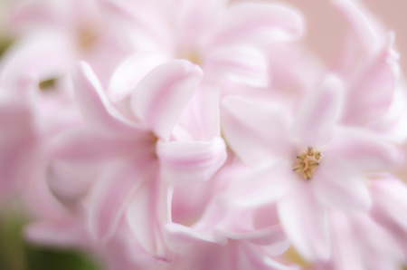 Blurry soft pink flowers background stock photo picture and royalty blurry soft pink flowers background stock photo 82740820 mightylinksfo