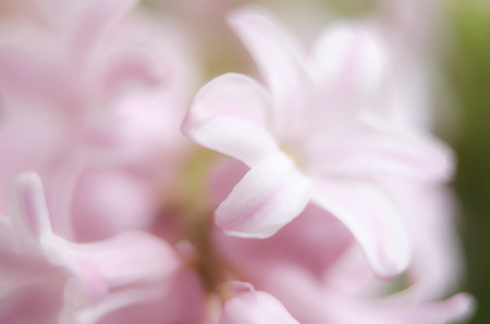 Blurry soft pink flowers background stock photo picture and royalty blurry soft pink flowers background stock photo 82740826 mightylinksfo