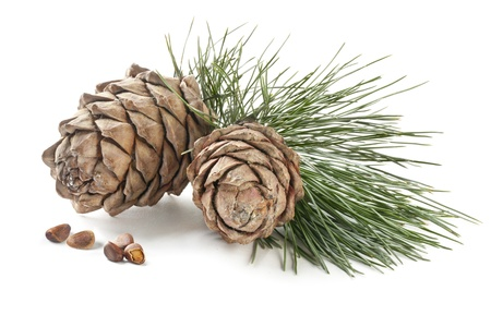 Cedar cones with branch and nuts on a white background