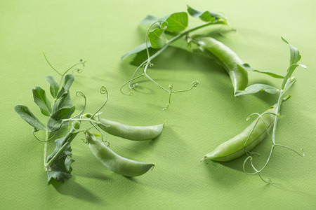 Fresh juicy pods of green peas art on green background