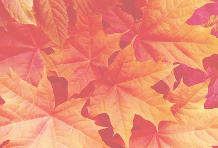 Foliage with main trendy Living Coral color of the year 2019. Colorful concept. Toned. Stok Fotoğraf