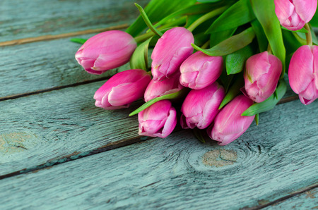Row of pink tulips against a blue background with space for the text. Festive flower background for a Mother's Day or other celebration Selective focus.