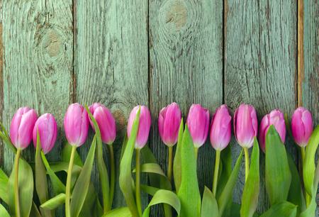 テキストのためのスペースを持つ青い背景に対するピンクのチューリップのピンクの行の行。母の日や他のお祝いのためのお祝いの花の背景は、テキストのためのスペースを持つ青い背景に対してチューリップ。母の日や他のお祝いのためのお祝いの花の背景。園芸 写真素材