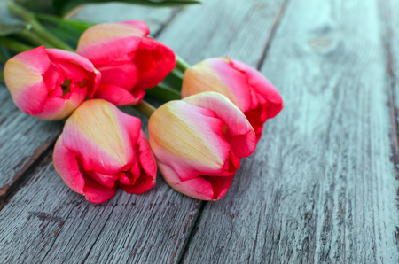 Row of pink tulips against a blue background with space for the text. Festive flower background for a Mother's Day or other celebration. Selective focus.