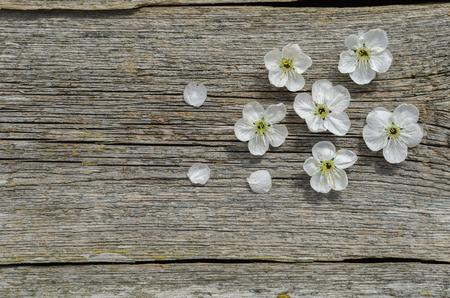 Wiosna kwiat wiśni na tle drewna. Wiosenne kwiaty na drewnianym tle. Widok z góry. Skopiuj miejsce.
