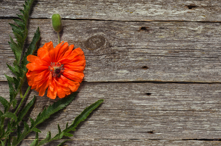 bouquet of red poppies on wooden background. Bouquet of red flowers. field poppies. summer flowers. Copy space.