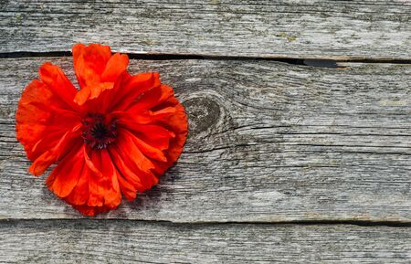 National american holiday Memorial Day concept. Wooden background with red poppy flower.Poppy flowers memorial background