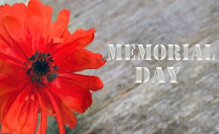 National american holiday Memorial Day text on wooden background with red poppy flower.