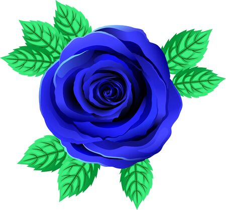 Vector Bright Blue Rose Flower. Rose Clipart With Petals And Leaf. Transparent Background. Close Up. Çizim