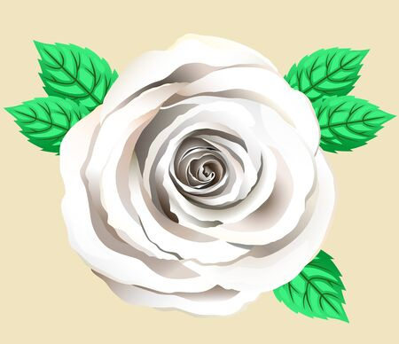 Vector Single White Rose Flower. Rose Clipart With Petals And Leaf. Hand Drawn Greeting Cart With Pretty Cream Rose. Close Up.