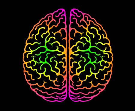Human Brain. Bright Colors Black Background. Cerebral Hemispheres, Convolutions Of The Mind Brain, Brain's Bends. View From Above, Front View, Realistic Anatomy.