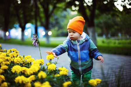ittle: A ittle cute toddler boy is straining hands towards the flowers in a green park.
