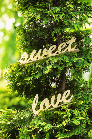 Handmade wooden vintage letters decoration. Word sweet love at green natural thuja background. photo