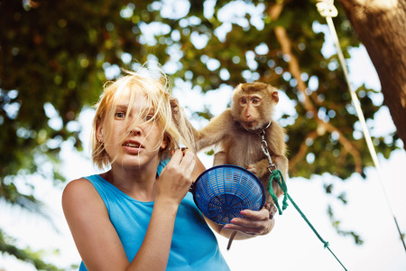 domestic animals: A closeup portrait of a scared woman attacked by a domestic macaque. Monkey is grabbing woman by hair. Concept of monkey agression. Stock Photo