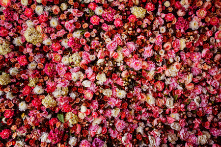 pink backdrop: Closeup image of beautiful flowers wall background with amazing red and white roses. Stock Photo
