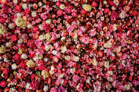 Gros plan de l'image de fond magnifique fleurs de mur avec de superbes roses rouges et blanches. Banque d'images