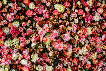 Closeup image of beautiful flowers wall background with amazing red and white roses. Stock fotó