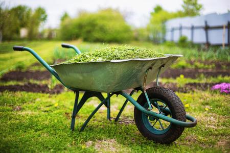 Closeup vintage wheelbarrow full of grass at green summer garden background.