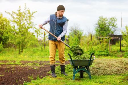 Jardinier mâle remplit brouette avec de l'herbe verte à l'aide de la pelle au fond de jardin de printemps. Banque d'images - 80146217