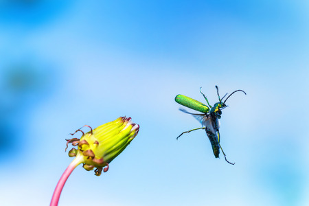yahoo: Green beetle is jumping from flower as symbol of joy and happy hiolday at blue sky background. Stock Photo