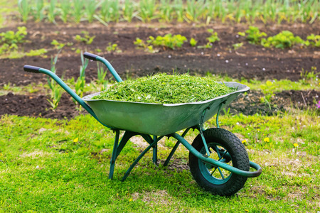 Closeup vintage wheelbarrow full of grass at spring garden background.