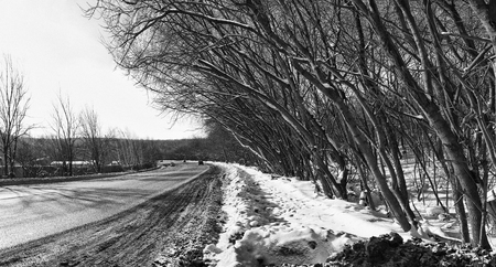 Black and white panorama landscape of winter road near a forest.