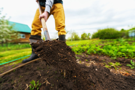 Gardener is digging soil with a shovel at spring green outdoors background.
