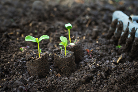 Closeup image of three green sprouts amd a raker at wet soil background.